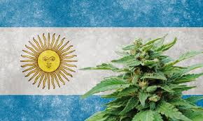 canabis argentina