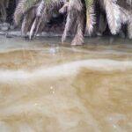 Aseguran que el aspecto inmundo del lago del parque San Martín se debe a un alga